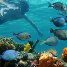 paradise-ocean-snorkel-and-parasailing-combo4